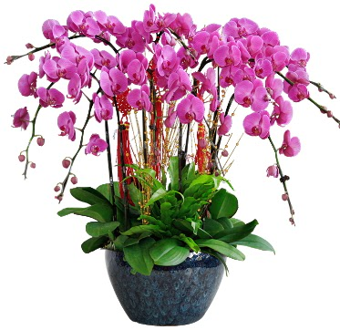 9 dallı mor orkide  Antalya Melisa 14 şubat sevgililer günü çiçek