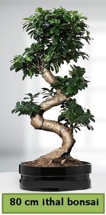 80 cm özel saksıda bonsai bitkisi  Antalya Melisa çiçekçi telefonları