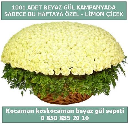 1001 adet beyaz gül sepeti özel kampanyada  Antalya Melisa çiçek gönderme sitemiz güvenlidir
