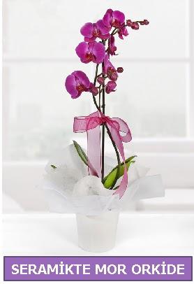 Seramik içerisinde birinci kalite tek dallı mor orkide  Antalya Melisa Melisa İnternetten çiçek siparişi