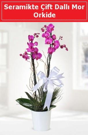 Seramikte Çift Dallı Mor Orkide  Antalya Melisa anneler günü çiçek yolla