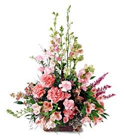 Antalya Melisa ucuz çiçek gönder  mevsim çiçeklerinden özel
