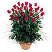 Antalya Melisa uluslararası çiçek gönderme  10 adet kirmizi gül cam yada mika vazo