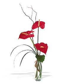 Antalya Melisa çiçek siparişi sitesi  cam yada mika Vazoda 3 adet  antoryum