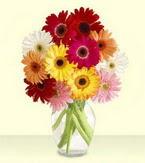 Antalya Melisa çiçek yolla , çiçek gönder , çiçekçi   cam yada mika vazoda 15 özel gerbera