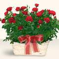 Antalya Melisa Melisa İnternetten çiçek siparişi  11 adet kirmizi gül sepette