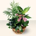 Antalya Melisa çiçek satışı  5 adet canli çiçek sepette