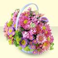Antalya Melisa yurtiçi ve yurtdışı çiçek siparişi  bir sepet dolusu kir çiçegi  Antalya Melisa çiçek gönderme sitemiz güvenlidir