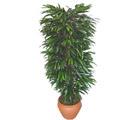 Antalya Melisa çiçek siparişi sitesi  Özel Mango 1,75 cm yüksekliginde