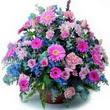 karisik mevsim kir çiçekleri  Antalya Melisa çiçek gönderme sitemiz güvenlidir