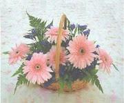 gerbera çiçeklerinde sepet   Antalya Melisa çiçek yolla