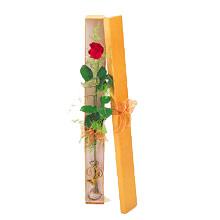 ince  kutuda  1  gül   Antalya Melisa çiçek yolla