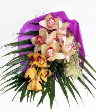 Antalya Melisa cicekciler , cicek siparisi  1 adet dal orkide buket halinde sunulmakta