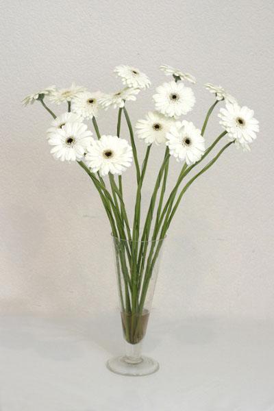 Antalya Melisa çiçek mağazası , çiçekçi adresleri  cam vazo içerisinde 17 adet sade gerbera