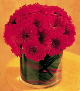 Antalya Melisa ucuz çiçek gönder  23 adet gerbera çiçegi sade ve sik cam içerisinde