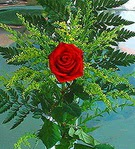 1 adet kirmizi gül buketi   Antalya Melisa çiçek siparişi vermek
