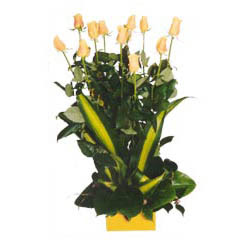 12 adet beyaz gül aranjmani  Antalya Melisa kaliteli taze ve ucuz çiçekler