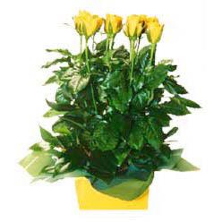 11 adet sari gül aranjmani  Antalya Melisa online çiçekçi , çiçek siparişi