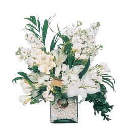 Antalya Melisa internetten çiçek siparişi  sadece beyazlardan olusmus mevsim cam yada mika tanzim