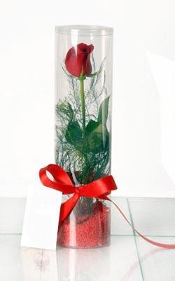 Antalya Melisa çiçek yolla  Silindir vazoda tek kirmizi gül