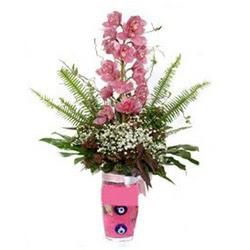 Antalya Melisa hediye çiçek yolla  cam yada mika vazo içerisinde tek dal orkide çiçegi