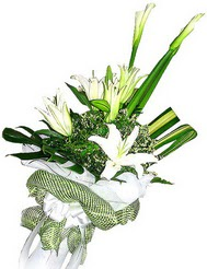 Antalya Melisa güvenli kaliteli hızlı çiçek  3 dal kazablanka çiçegi ve yesillikler