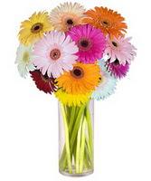 Antalya Melisa internetten çiçek siparişi  Farkli renklerde 15 adet gerbera çiçegi