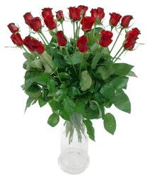 Antalya Melisa çiçekçi telefonları  11 adet kimizi gülün ihtisami cam yada mika vazo modeli