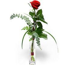 Antalya Melisa 14 şubat sevgililer günü çiçek  Sana deger veriyorum bir adet gül cam yada mika vazoda