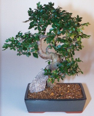 Antalya Melisa çiçek gönderme sitemiz güvenlidir  ithal bonsai saksi çiçegi  Antalya Melisa çiçek siparişi sitesi