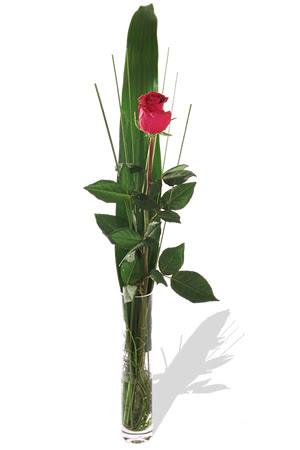 1 adet cam vazo içerisinde kirmizi gül  Antalya Melisa çiçek , çiçekçi , çiçekçilik