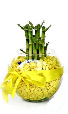 cam fanus içerisinde bambo  Antalya Melisa internetten çiçek satışı