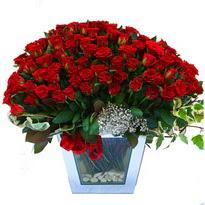Antalya Melisa çiçekçiler   101 adet kirmizi gül aranjmani