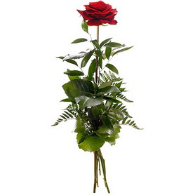Antalya Melisa online çiçekçi , çiçek siparişi  1 adet kırmızı gülden buket