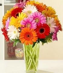 Antalya Melisa çiçek servisi , çiçekçi adresleri  15 adet gerbera çiçek vazosu