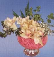 Antalya Melisa çiçek mağazası , çiçekçi adresleri  Dal orkide kalite bir hediye