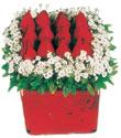 Antalya Melisa çiçek gönderme  Kare cam yada mika içinde kirmizi güller - anneler günü seçimi özel çiçek