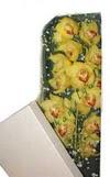 Antalya Melisa çiçek gönderme  Kutu içerisine dal cymbidium orkide