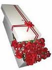 Antalya Melisa çiçekçi telefonları  11 adet 1.kalite magnum güller