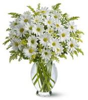 Vazo içerisinde beyaz krizantem çiçekleri  Antalya Melisa çiçekçi mağazası