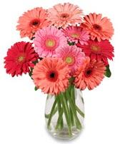 vazo içerisinde 13 adet gerbera çiçeği  Antalya Melisa çiçek siparişi sitesi