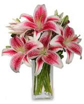 Vazo içerisinde 5 dal kazablanka çiçeği  Antalya Melisa cicekciler , cicek siparisi