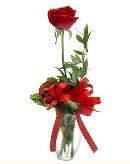 vazo içerisinde 1 adet kırmızı gül  Antalya Melisa çiçekçi telefonları