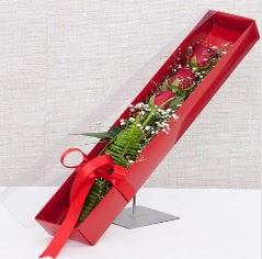 Kutu içerisinde 3 adet kırmızı gül  Antalya Melisa online çiçek gönderme sipariş