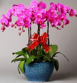 7 dallı mor orkide  Antalya Melisa çiçek online çiçek siparişi