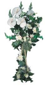 Antalya Melisa çiçek mağazası , çiçekçi adresleri  antoryumlarin büyüsü özel