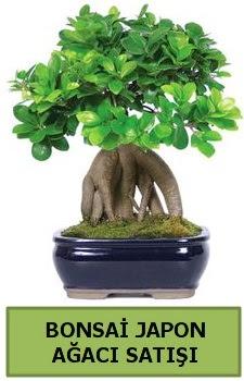 Bonsai japon ağacı satışı  Antalya Melisa çiçek satışı