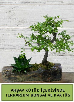 Ahşap kütük bonsai kaktüs teraryum  Antalya Melisa internetten çiçek siparişi