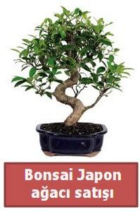 Japon ağacı bonsai satışı  Antalya Melisa çiçek siparişi sitesi