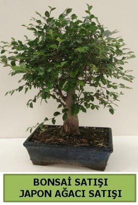 Minyatür bonsai japon ağacı satışı  Antalya Melisa çiçek gönderme sitemiz güvenlidir